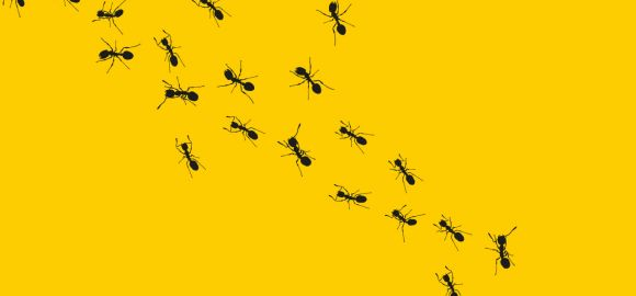 4 ways being a PEST wins customers that love you